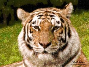 Fondo de Pantalla / Wallpaper - Tigre